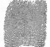 CSI Fingerprints