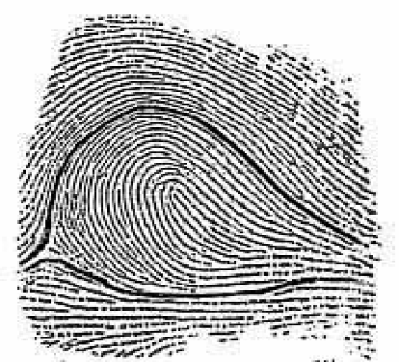 Types of Fingerprints - Fingerprinting